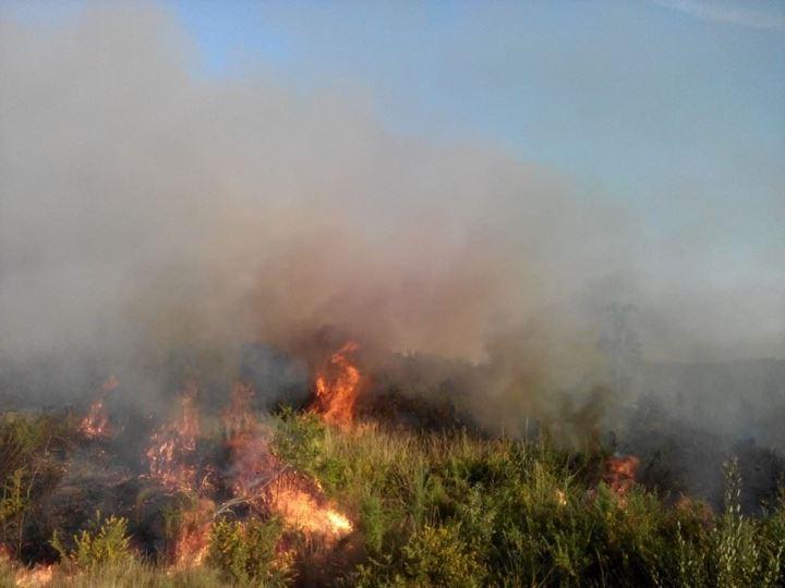 Incêndio em área agrícola em Sanguinheira