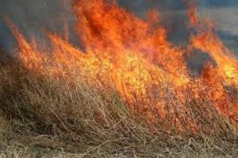 ver notícia Dois mil metros quadrados de área florestal ardida em Enxofães